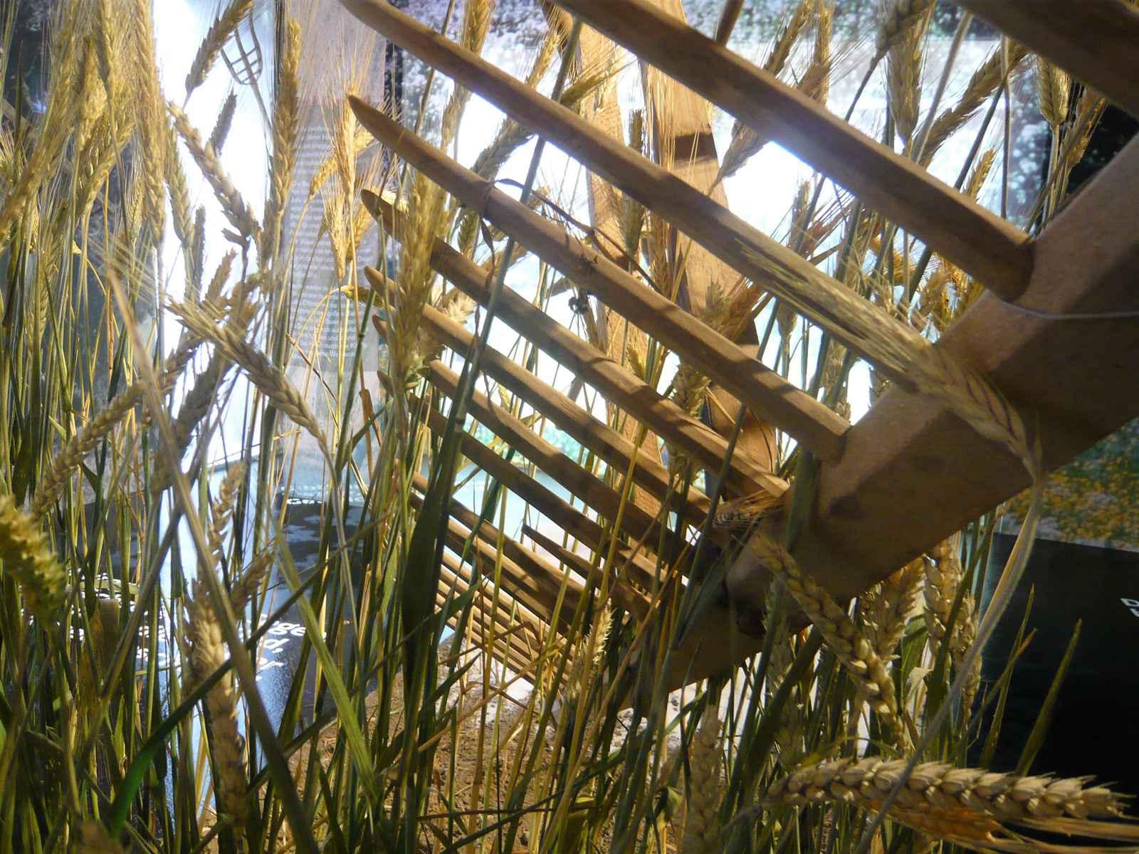 Ackermodell Detail mit Rechen und Weizenähren
