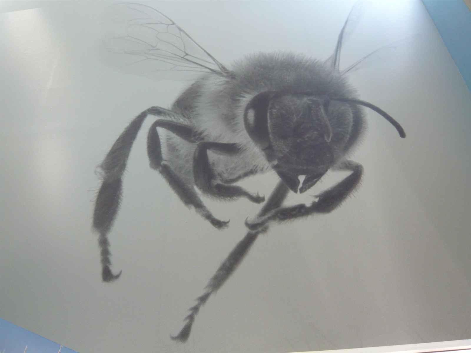 Riesenbiene
