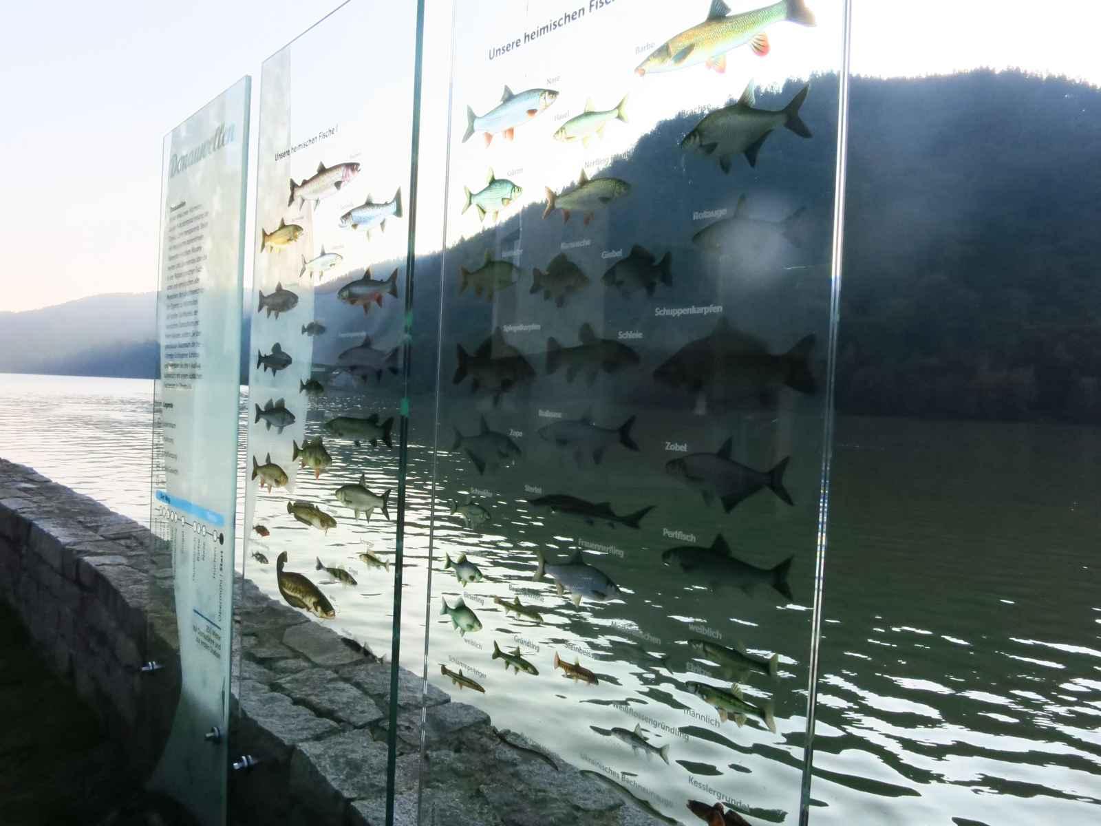 Donauwellen: drei Startstelen mit Orientierungsinformation