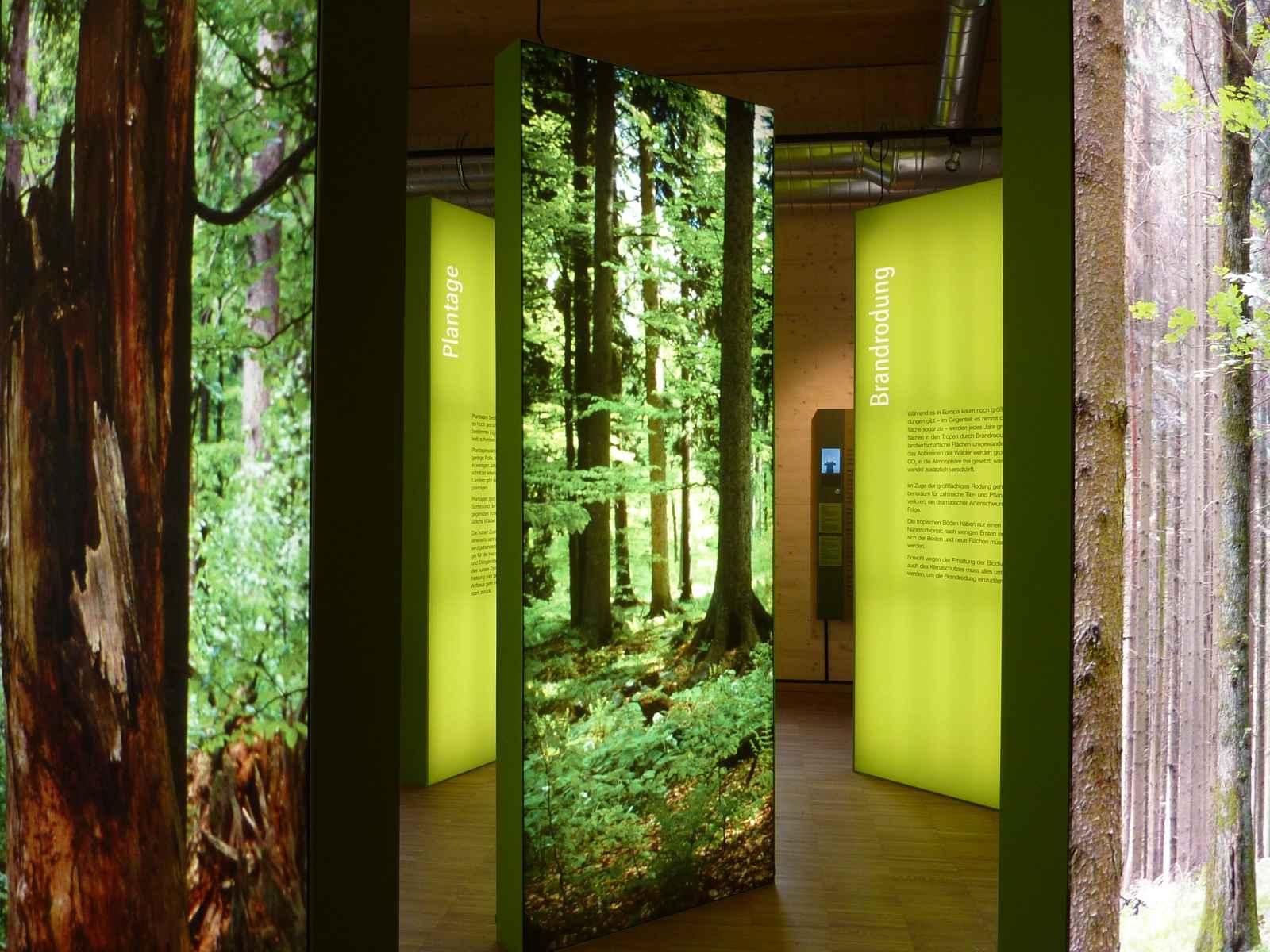 Urwald - Kulturwald hinterleuchtete Informationsstelen
