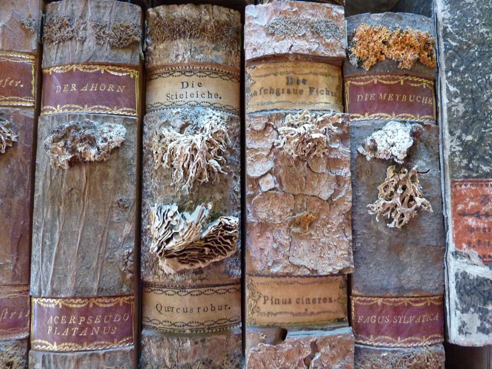 Waldbücher